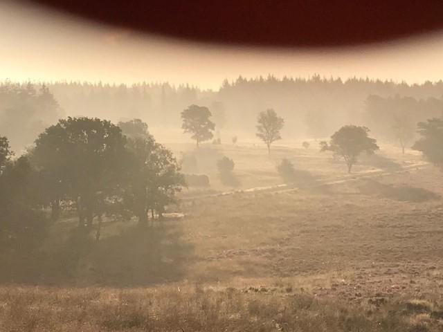https://www.nijmegenatletiek.nl/userfiles/nieuws/572_2021.safari.0509.1_2.jpg